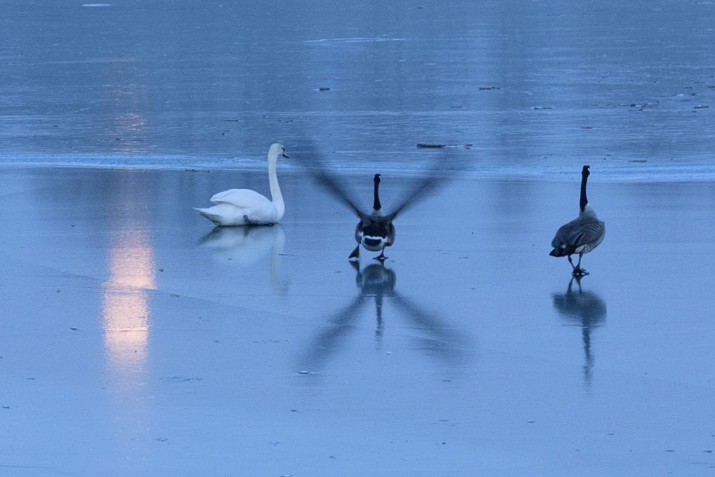 Vögel auf dem Kemnader See
